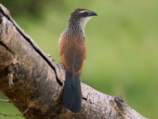 Birdwatching in Queen Elizabeth, Birding Uganda