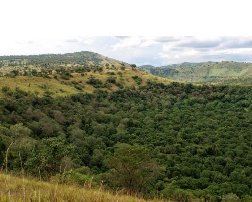 Maramagambo Forest Safari in Uganda