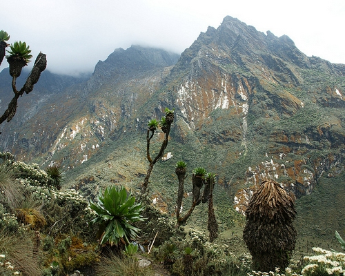 Rwenzori Mountains Climbing