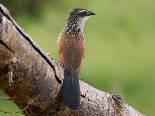 birding in queen elizabeth uganda