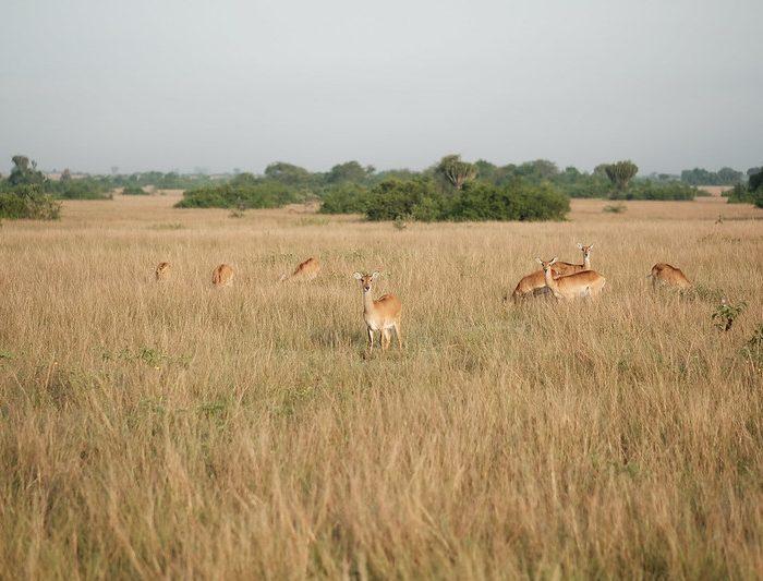 Kasenyi Plains Uganda