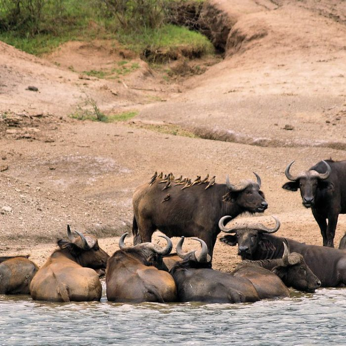 Wildlife Research Tours within Queen Elizabeth National Park