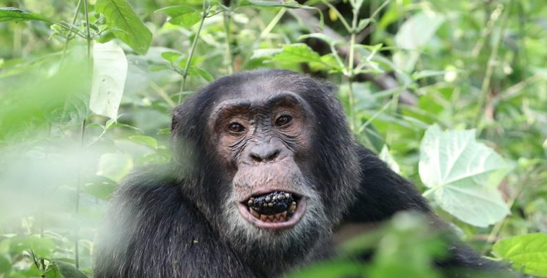 kibale safari uganda