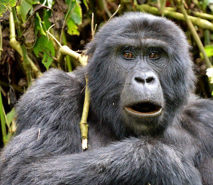 3 Day Gorilla Trekking Uganda