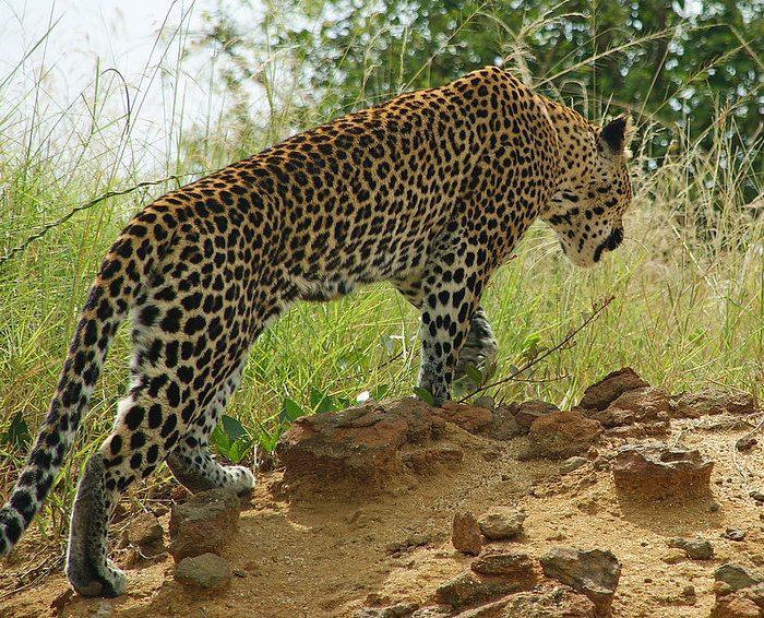 12 Days Safari To Uganda