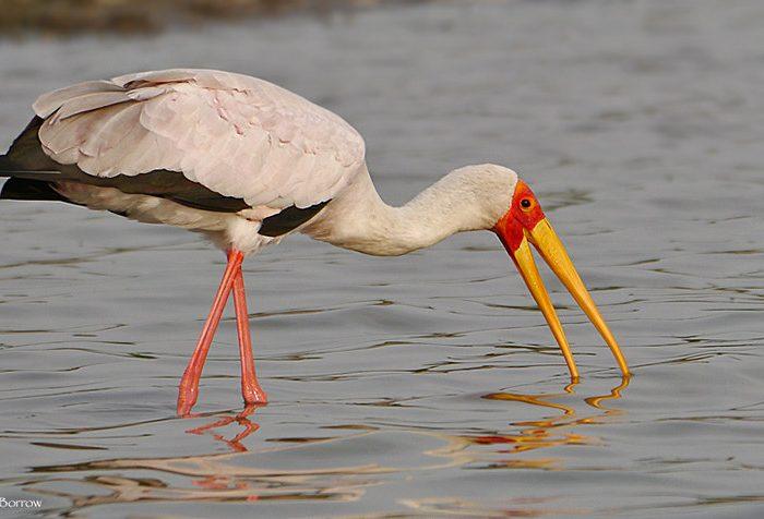 Birdwatching in Queen Elizabeth, Birding Uganda